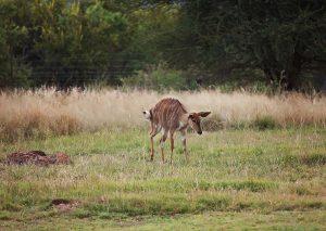 Wildlife Photography - Mangwa Valley Lodge